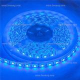 IP65 blauwe LEIDENE SMD5050 Strook met Uitstekende kwaliteit