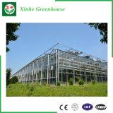 La serra del policarbonato del tetto di Venlo riveste la serra di pannelli del vetro temperato