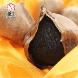 중국 유기 단 하나 전구 검정 마늘 600g