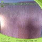 Contre-plaqué de peau de porte de visage de placage de Bintangor de noyau de peuplier avec le prix bon marché