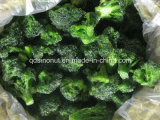 Gefrorenes Broccoli (2-4cm)