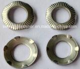 Rondelle conique d'acier inoxydable avec six dents/bavures