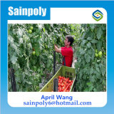 Estufa do policarbonato do baixo custo hidropónica para agricultural