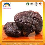 De zuivere Natuurlijke Ganoderma shell-Gebroken Olie Sofegel van de Spore