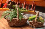 (BC-SF1013) Cesta natural hecha a mano respetuosa del medio ambiente de la flor de la paja
