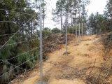 Precio del alambre de púas de la alta seguridad del surtidor de China por el rodillo para la venta