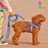 نيلون انعكاسيّة [نوكتيلوسنت] كلب ربط [بت دوغ] يمشي حبة