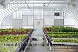 Système de culture hydroponique de qualité de vente directe