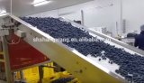 Fresh Blueberry Juice Production Line/Blueberry Juice Filling Machinery