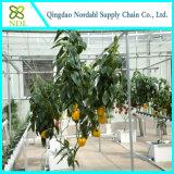 Sistema hidropónico agrícola de la alta calidad
