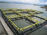 Resistir las jaulas flotantes de los pescados de la tormenta