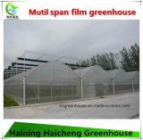 Multispan 딸기를 위한 Hydroponic 필름 녹색 집