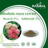 Выдержка Rosavin 3% Salidroside 1% Rhodiola Rosea