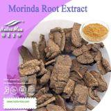Poudre naturelle d'extrait de racine de 100% Morinda (5%~20% Beta sitosterol)