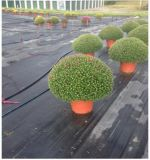 100%年のバージンPPの温室の地被植物