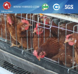 um tipo recipiente da galinha para camadas na exploração agrícola de África