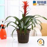 Sauvegarder le laiton de la meilleure qualité d'aperçu gratuit de 10% balayant les planteurs en plastique de bacs de fleur de peinture de plantes ornementales