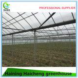 Hot Sale Film Green House pour jardin et fruits