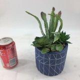 Fiori artificiali del Succulent delle piante di autunno