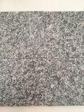 Гранит G623 сезама белый естественный для шага лестниц