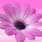 The Chrysanthemum Inkjet Imprimé Peinture à l'huile pour la décoration intérieure