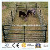 電流を通されるヒツジのヤギの家畜は塀を耕作する