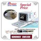 Блок развертки ультразвука - ветеринар. (Veterinary) Bw510V