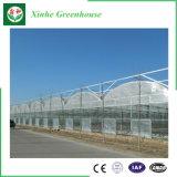 農業のための中国の低価格のマルチスパンのプラスチックフィルムの温室