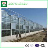 Serra di vetro del traforo economico per le verdure