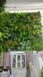 Giardino verticale artificiale Pflanzentyp 3 di alta qualità