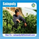 コショウのための屋内野菜栽培の太陽温室