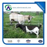 Panneaux de service de fournisseur d'or/panneaux soudés de bétail de fil