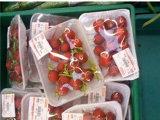 Bandejas plásticas descartáveis de empacotamento amigáveis do serviço do alimento da fábrica de Eco em Walmart