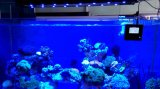 Wire / Wireless Controlled Coral Reef Usado LED Acuario Luz