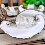 Cogumelo de Shiitake novo da colheita, cogumelo quente da flor do chá da venda