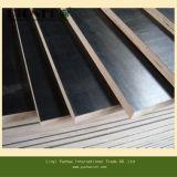 Qualitäts-Gleitschutzfilm stellte das Furnierholz gegenüber, das durch Linyi-Fabrik hergestellt wurde