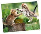 Photo di alluminio Panels per Cute Animals