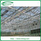 서비스를 위한 하이테크 덩굴 작물 hydroponic 성장하고 있는 시스템