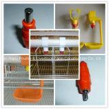 Подгонянное машинное оборудование фермы в доме цыплятины с панельным домом низкой цены