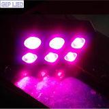 6 morceaux 42*3W LED d'ÉPI élèvent 756W léger