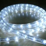Première lumière de vente IP65 avec du CE, RoHS, bonne qualité de corde de Y2 DEL