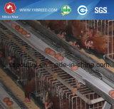 La mejor jaula de la capa de la exportación de Nigeria Lagos para la granja grande