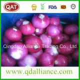 Frische abgezogene weiße purpurrote Zwiebel mit Vakuumsatz