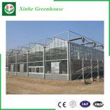 Landwirtschaftliche Gewächshäuser mit ein Form Aquaponics wachsenden Systemen