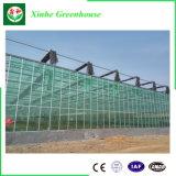 Multispan Glasgewächshaus für die Landwirtschaft