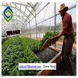 Chambre verte de film plastique de tunnel de serre chaude de culture hydroponique pour la tomate