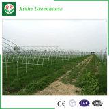 Serra di agricoltura e serra del giardino per la verdura