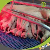 Equipamento de exploração agrícola do porco para a base de parada da porca