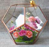 هندسيّة بلّوريّة شكل [ترّريومس] سطح طاولة صندوق مزارع إناء زهر كرة يعبّئ نوع زجاجيّة [ترّريومس] حديقة [ترّريومس]