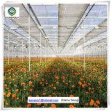 Venlo PC 장 토마토를 위한 Hydroponic 시스템 온실